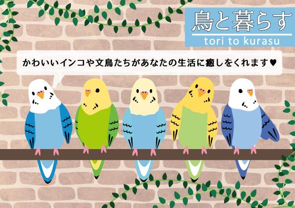 【コーナーPOP】鳥と暮らす(A5)